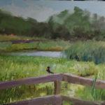 Wetland at Tinicum Park